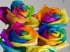 Tye-Dye Roses!