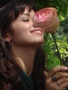 rose wars