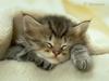 Cuddle me please