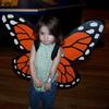 butterfly wings.
