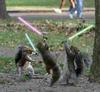 Jedi lightsaber squirrels