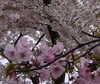 Stroll the Cherry Blossoms!