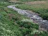 A dreadfully serene creek