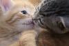 a pet kiss ♥
