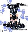 Thorn 1990