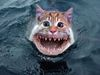 Whokilled Myfish